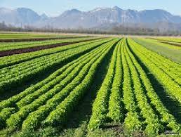 اصول و مفاهیم کشاورزی ارگانیک